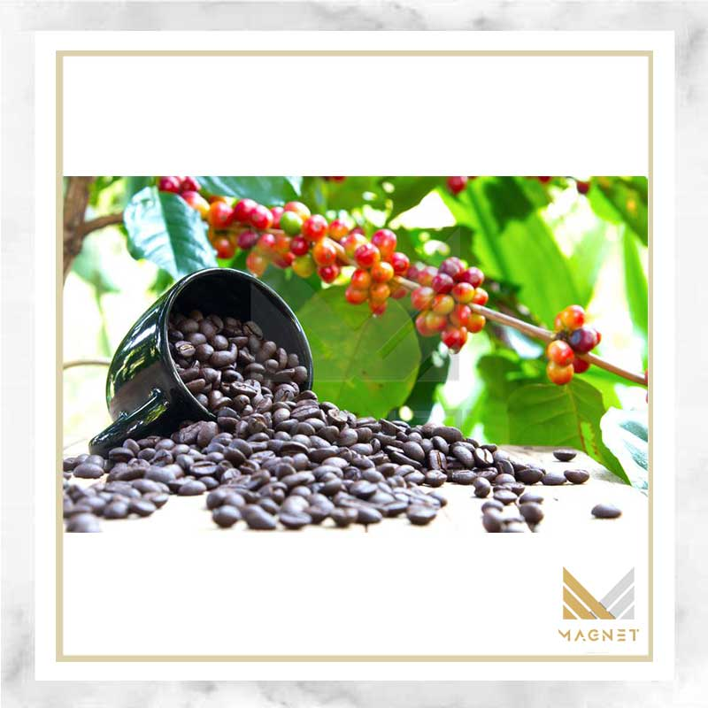 تاریخچه دانه قهوه , دان قهوه